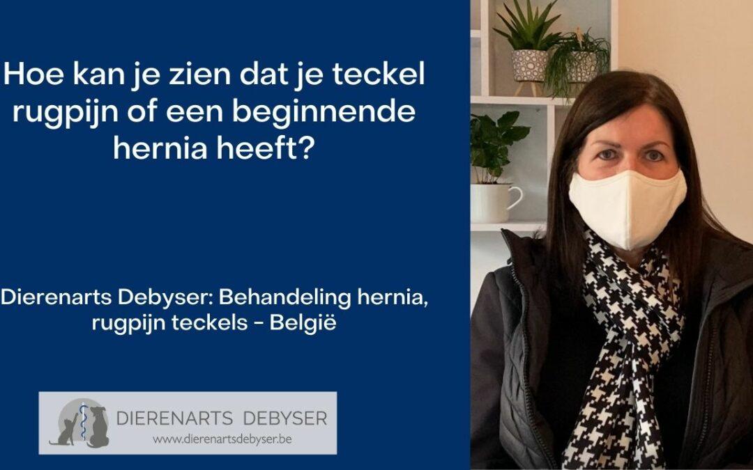 Hernia rugpijn teckels - Belgie