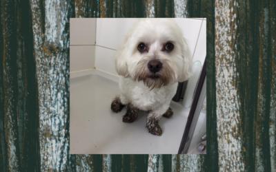 Hond Miel terug fit dankzij acupunctuur