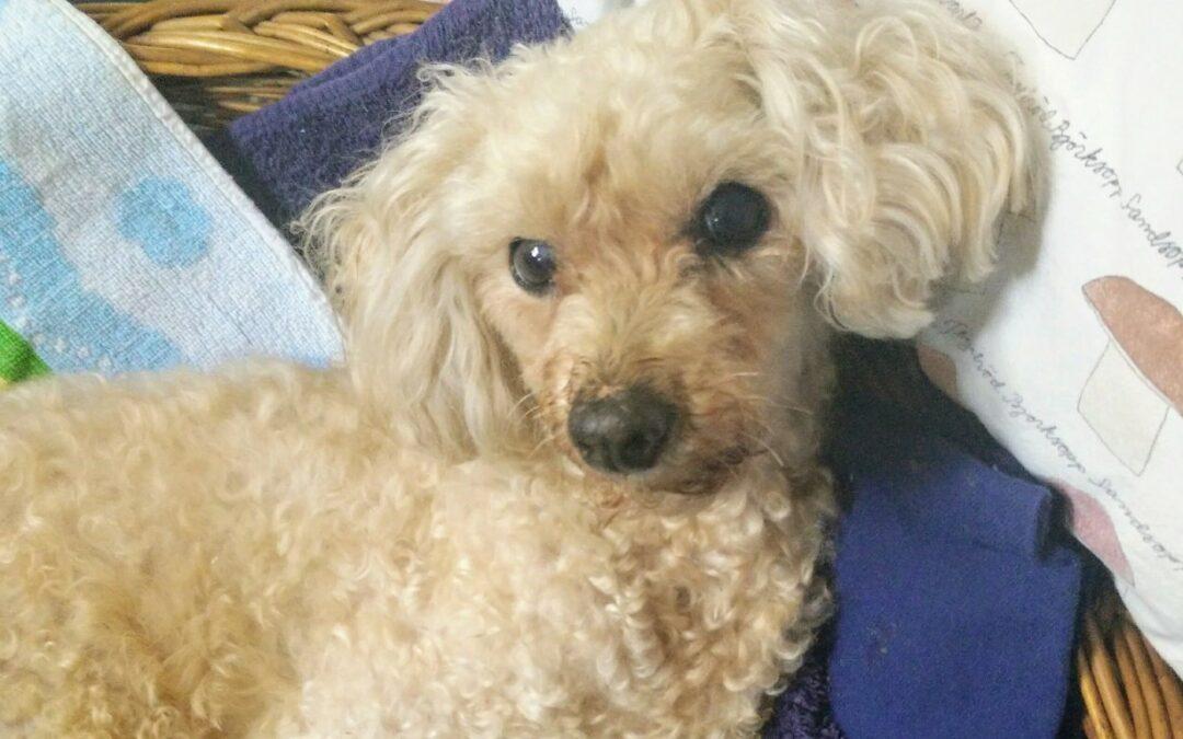acupunctuur osteopathie honden