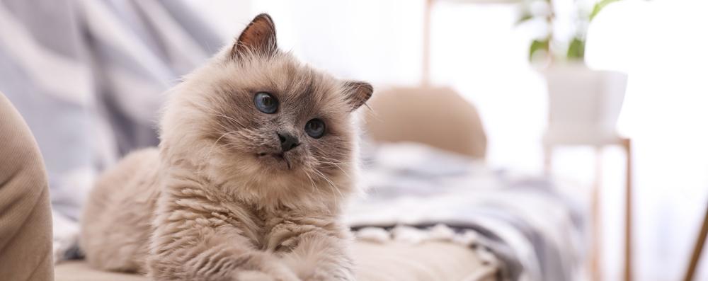 Artrose bij katten: 5 signalen hoe je dit kan zien bij jouw kat