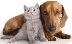 behandeling van honden en katten