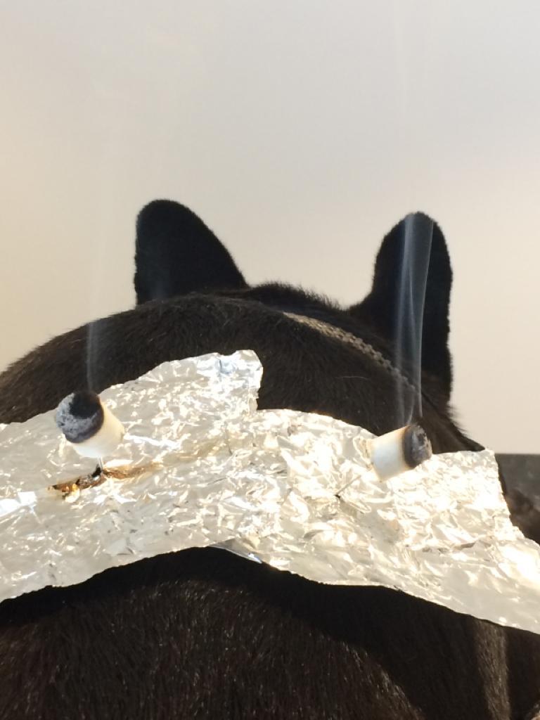 behandeling met moxa - hond