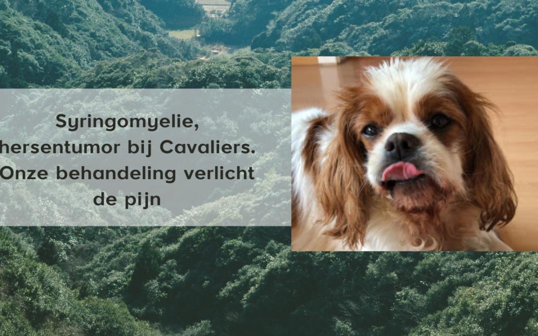 dierenarts syringomyelie hond nazareth