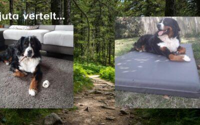 De hond Njuta vertelt zelf over haar ervaring bij de dierenarts