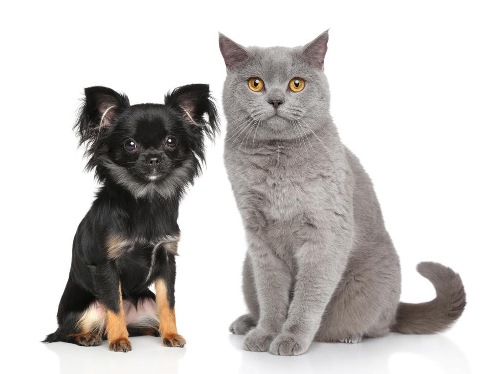 hond en kat acupunctuur