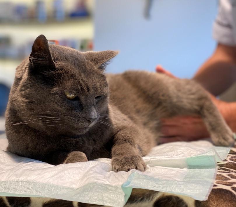 katten osteopathie
