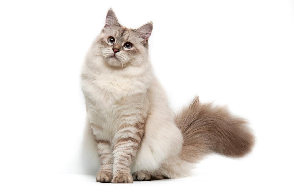 katten klachten