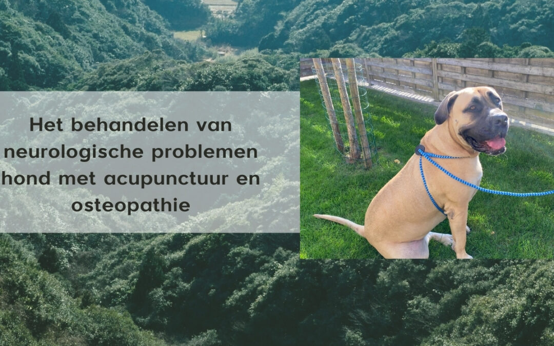 neurologische problemen hond acupunctuur osteopathie