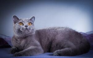 pijnlijke gewrichten bij katten - 5 signalen
