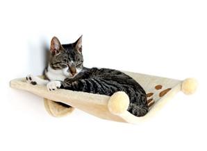 stress katten verminderen met doordachte slaapplek