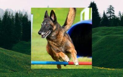 Palliatieve behandeling na sportcarriere: sporthond Juna