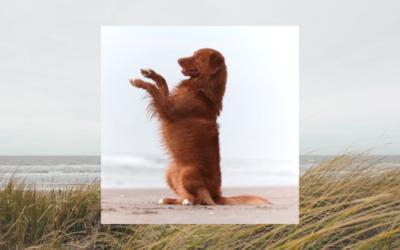 Acupunctuur en osteopathie bij supersensitieve honden